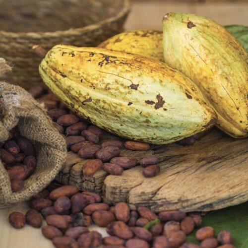 Inicia Festival del Chocolate Dominicano